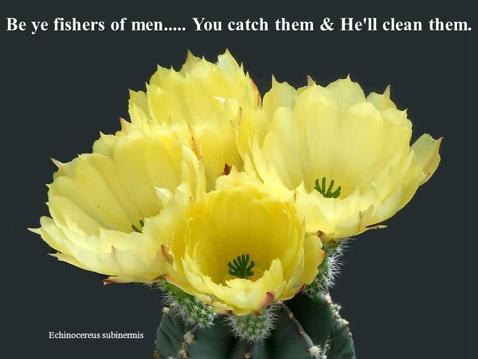 Be ye fishers of men..... You catch them & He ll clean them.