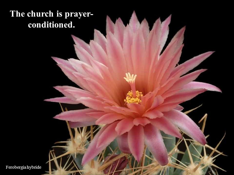 The church is prayer-conditioned.