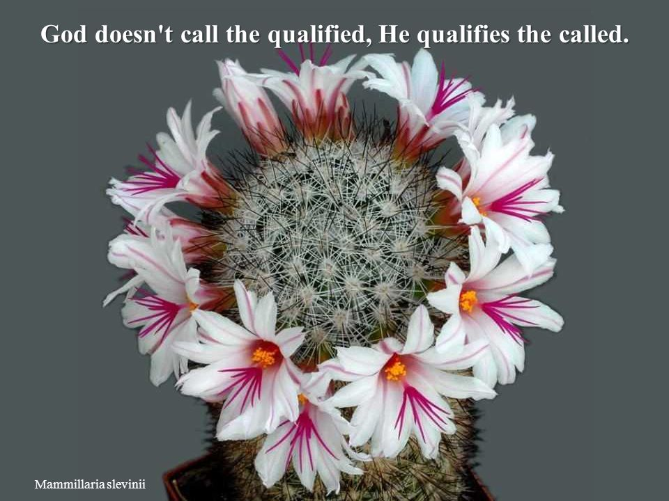 God doesn t call the qualified, He qualifies the called.