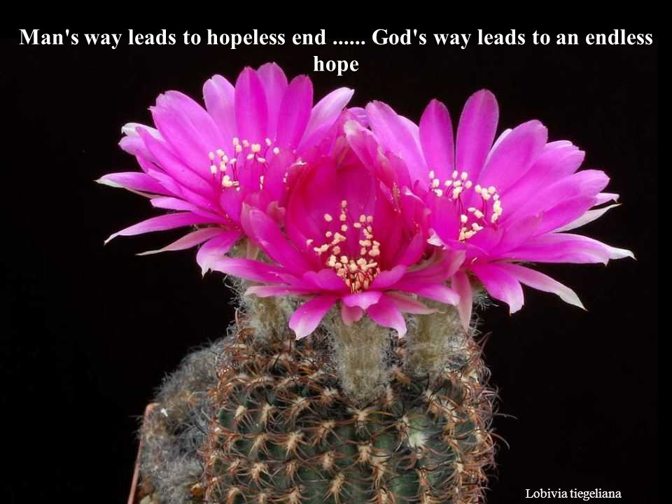 Man s way leads to hopeless end ...... God s way leads to an endless hope