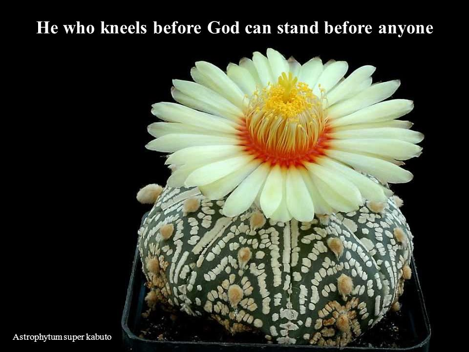 He who kneels before God can stand before anyone