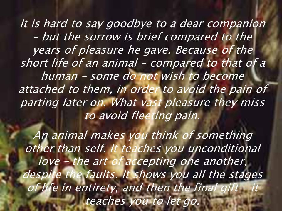 It is hard to say goodbye to a dear companion – but the sorrow is brief compared to the years of pleasure he gave. Because of the short life of an animal – compared to that of a human – some do not wish to become attached to them, in order to avoid the pain of parting later on. What vast pleasure they miss to avoid fleeting pain.