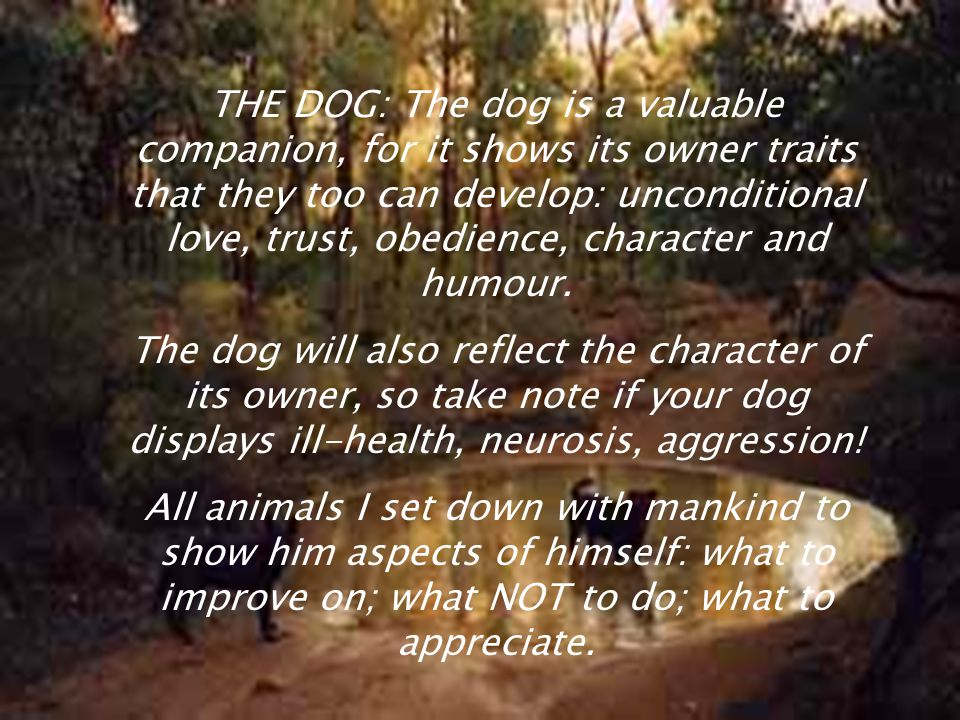 THE DOG: The dog is a valuable companion, for it shows its owner traits that they too can develop: unconditional love, trust, obedience, character and humour.