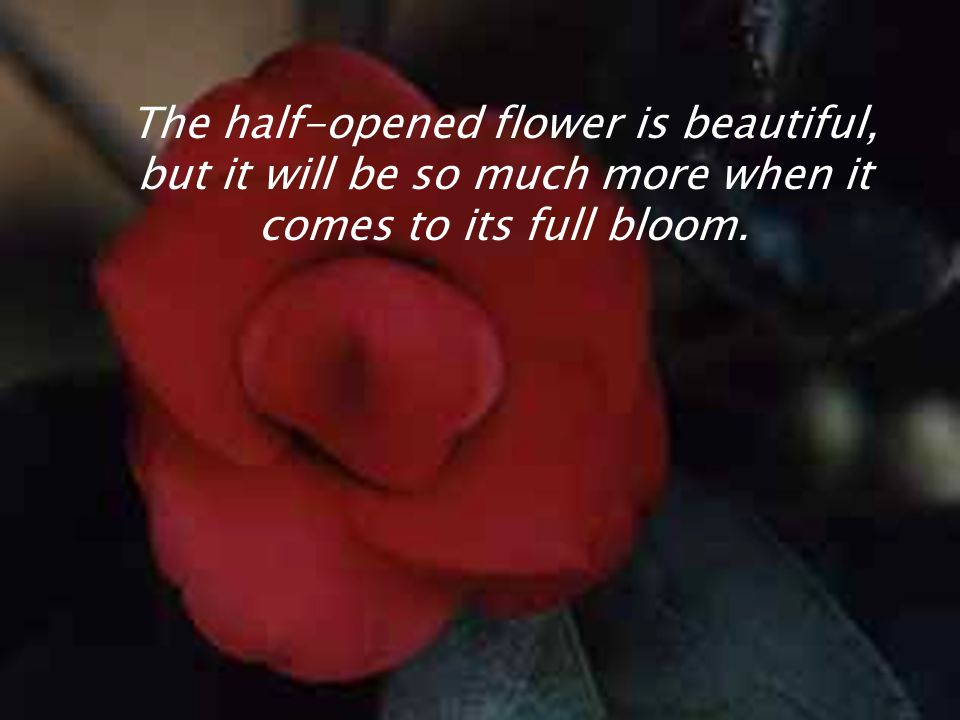 The half-opened flower is beautiful, but it will be so much more when it comes to its full bloom.