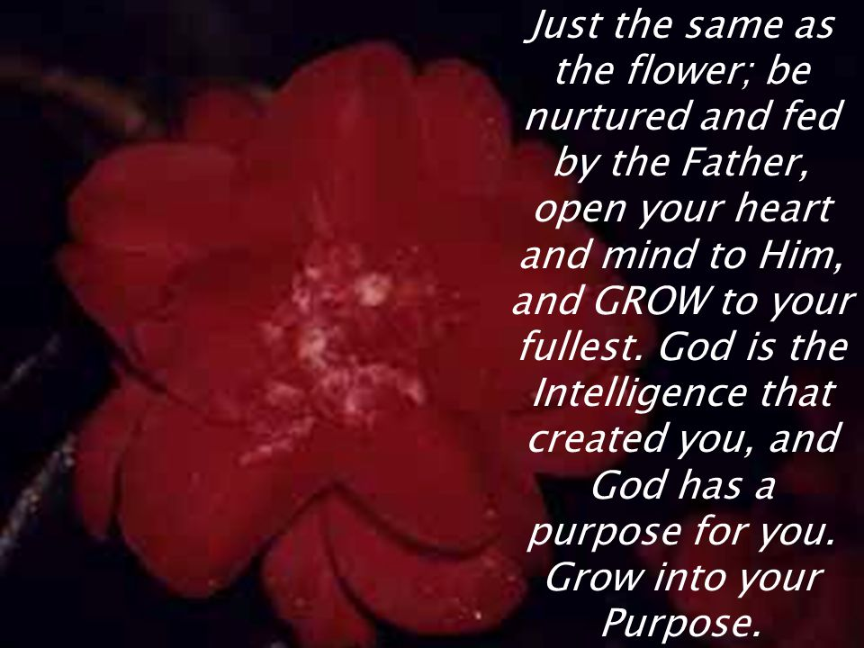 Just the same as the flower; be nurtured and fed by the Father, open your heart and mind to Him, and GROW to your fullest.