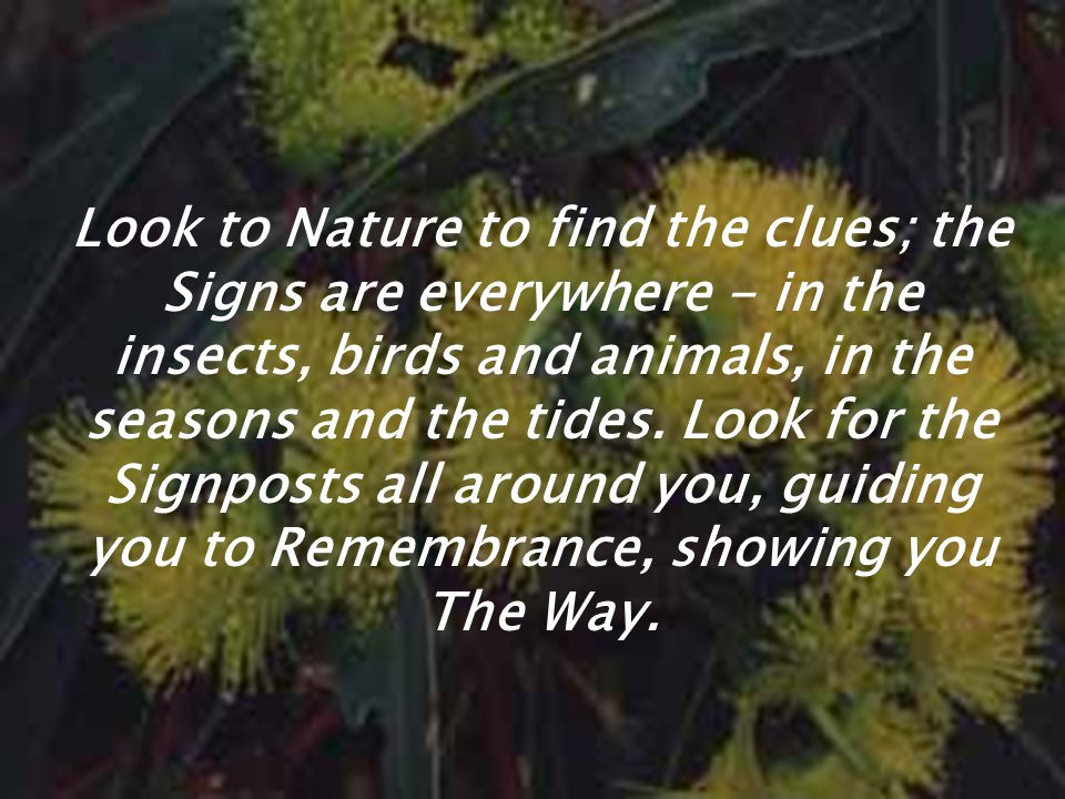 Look to Nature to find the clues; the Signs are everywhere - in the insects, birds and animals, in the seasons and the tides.