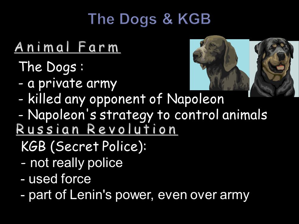 The Dogs & KGB Animal Farm The Dogs : - a private army
