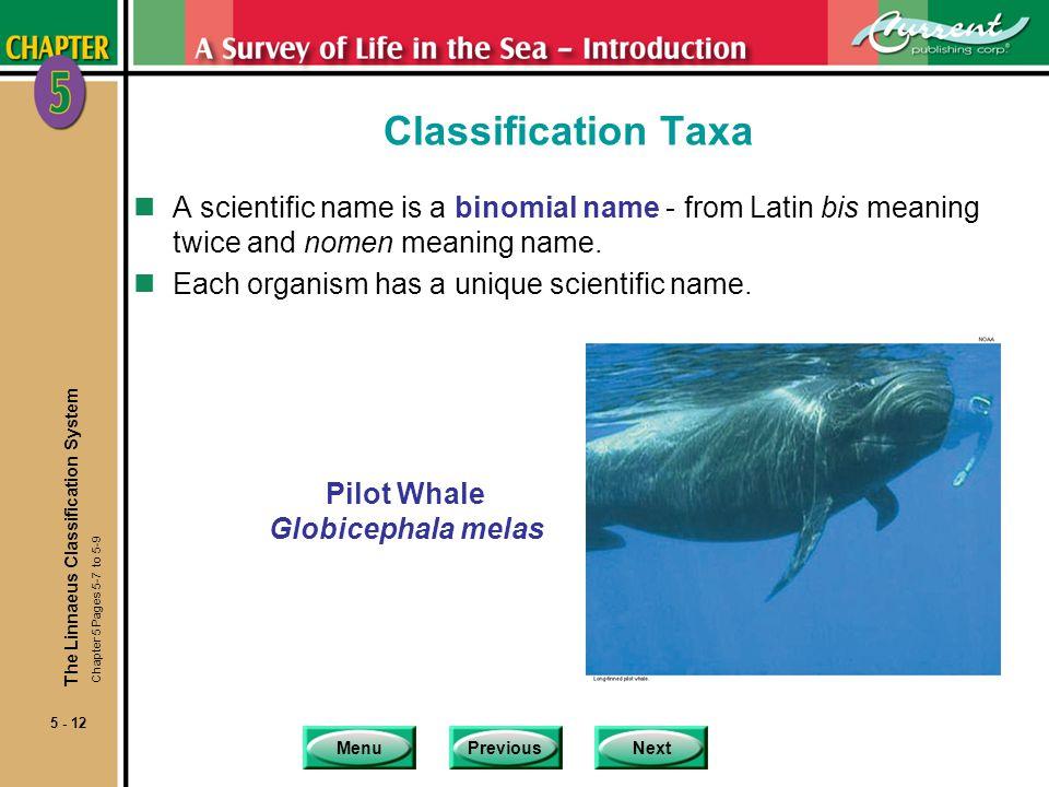 Pilot Whale Globicephala melas