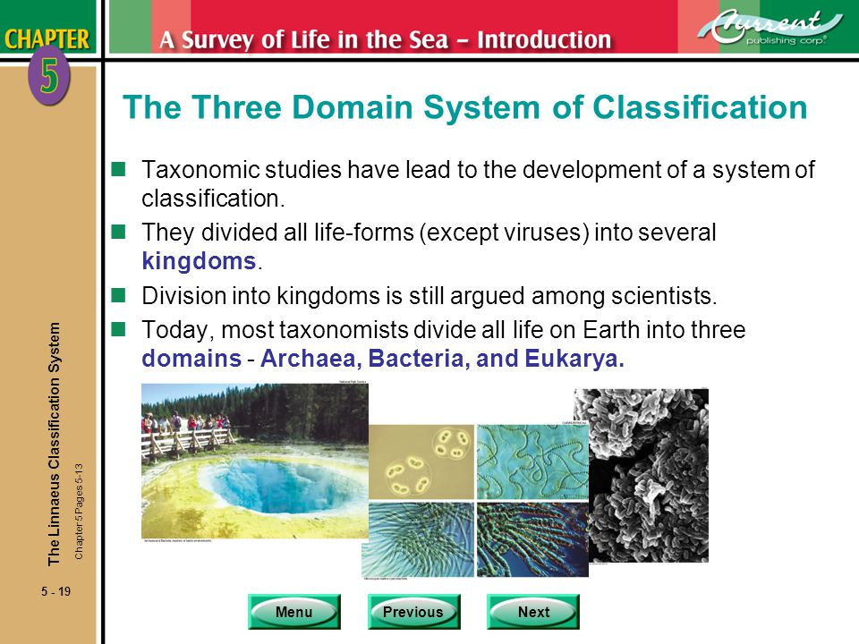 The Three Domain System of Classification