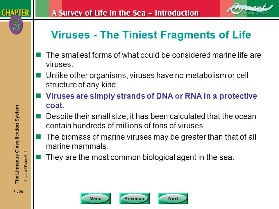 Viruses - The Tiniest Fragments of Life