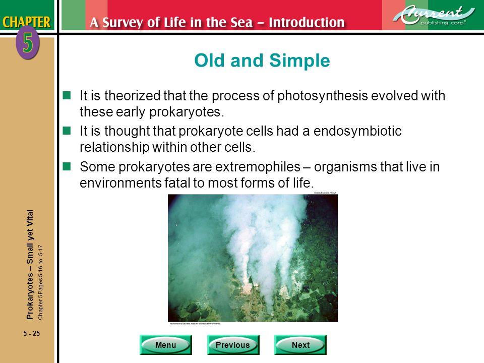 Old and Simple It is theorized that the process of photosynthesis evolved with these early prokaryotes.