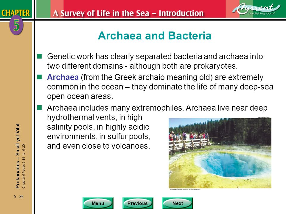 Archaea and Bacteria Genetic work has clearly separated bacteria and archaea into two different domains - although both are prokaryotes.