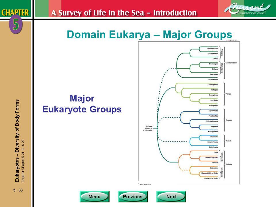 Domain Eukarya – Major Groups