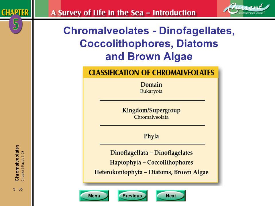 Chromalveolates - Dinofagellates, Coccolithophores, Diatoms and Brown Algae
