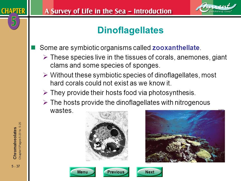 Dinoflagellates Some are symbiotic organisms called zooxanthellate.
