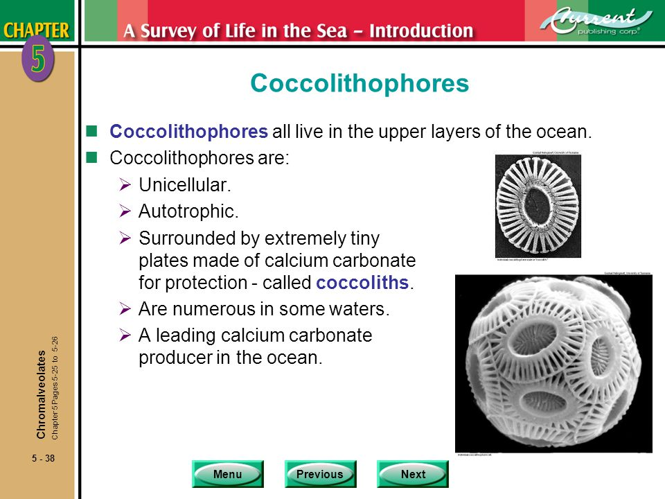 Coccolithophores Coccolithophores all live in the upper layers of the ocean. Coccolithophores are: