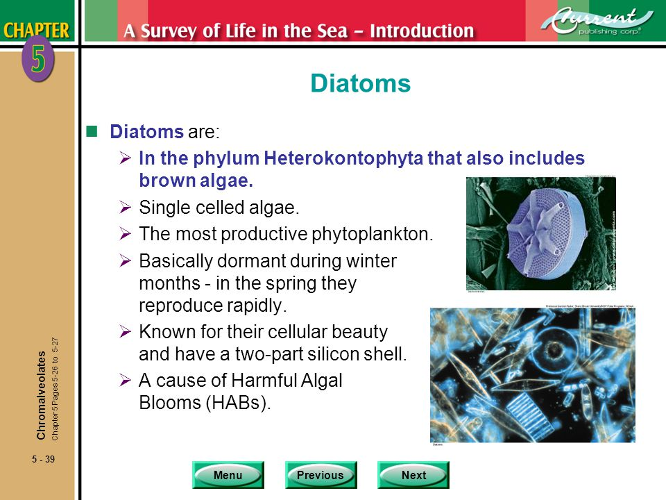 Diatoms Diatoms are: In the phylum Heterokontophyta that also includes brown algae. Single celled algae.