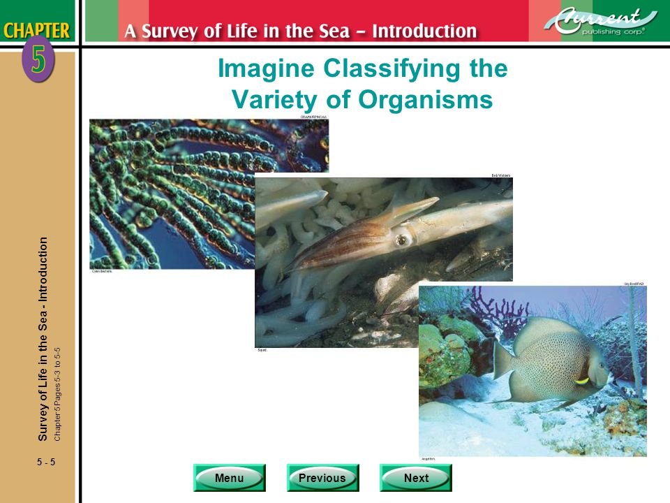 Imagine Classifying the Variety of Organisms
