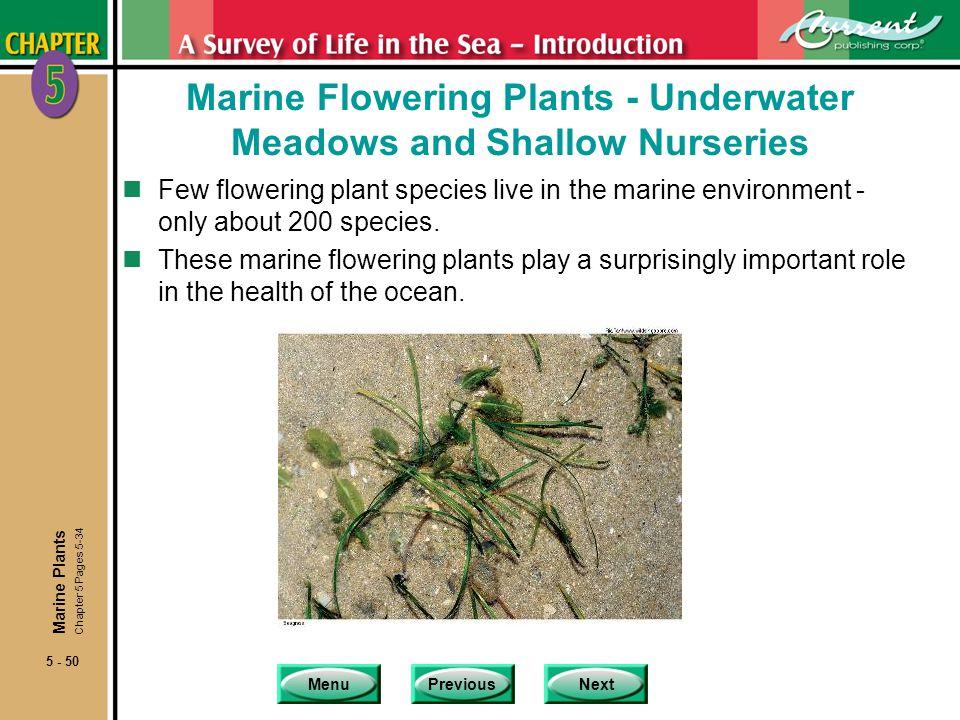 Marine Flowering Plants - Underwater Meadows and Shallow Nurseries