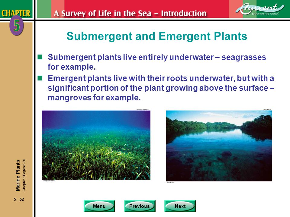 Submergent and Emergent Plants