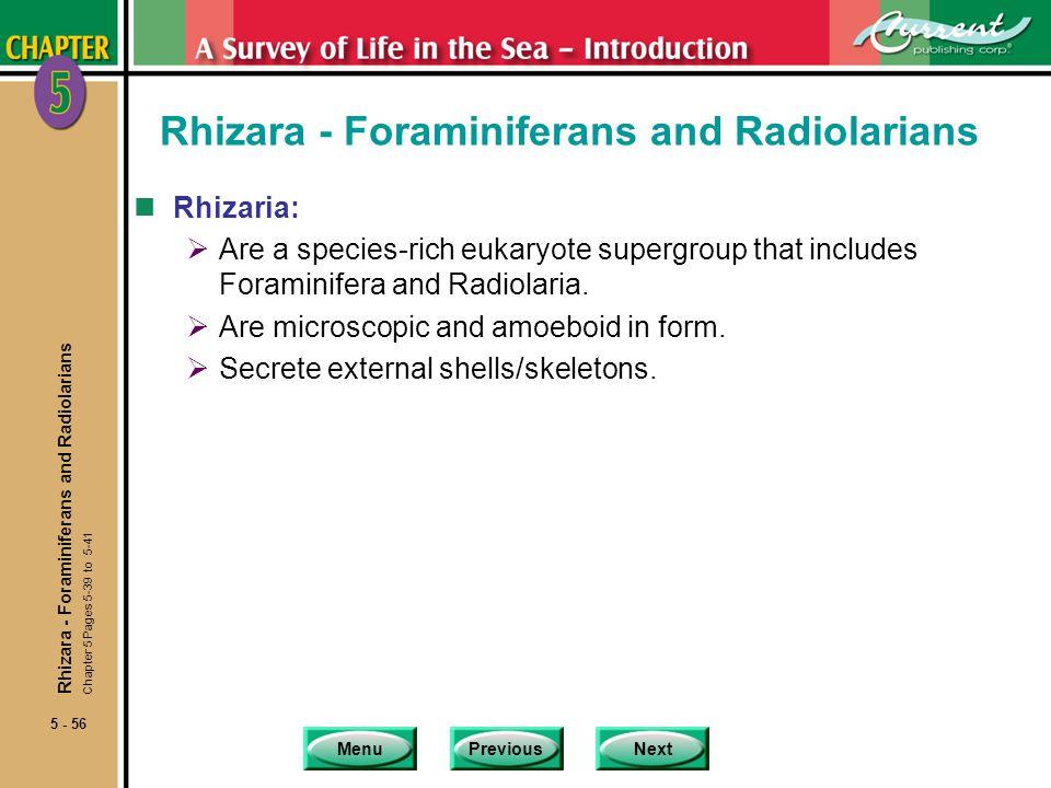 Rhizara - Foraminiferans and Radiolarians