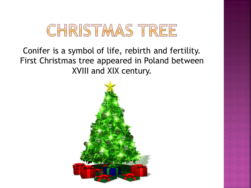 Christmas tree Conifer is a symbol of life, rebirth and fertility.