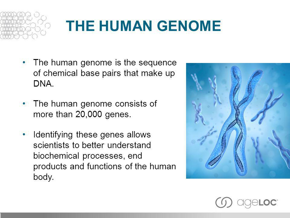 The Human Genome The human genome is the sequence of chemical base pairs that make up DNA. The human genome consists of more than 20,000 genes.