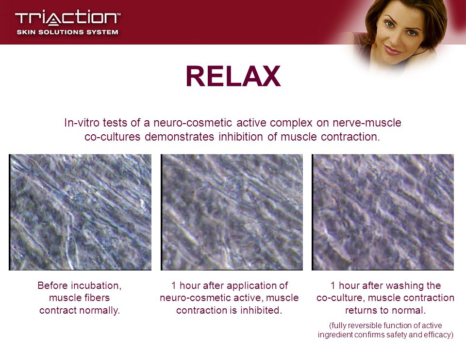 Before incubation, muscle fibers contract normally.
