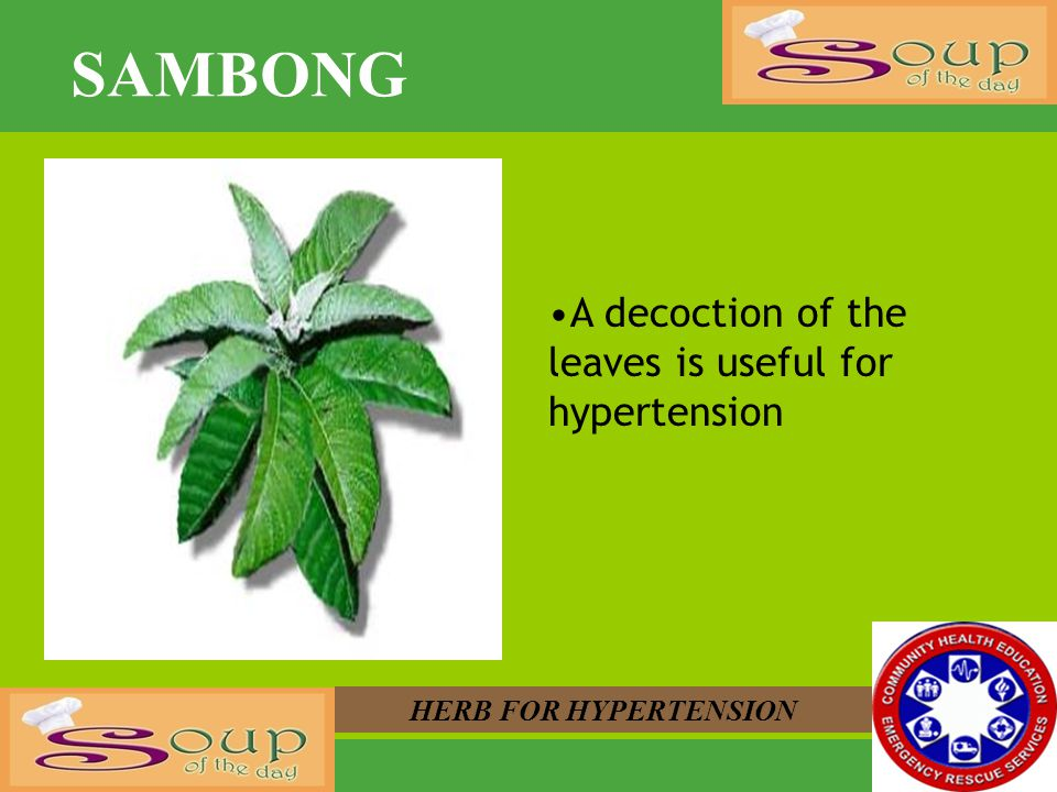 SAMBONG A decoction of the leaves is useful for hypertension