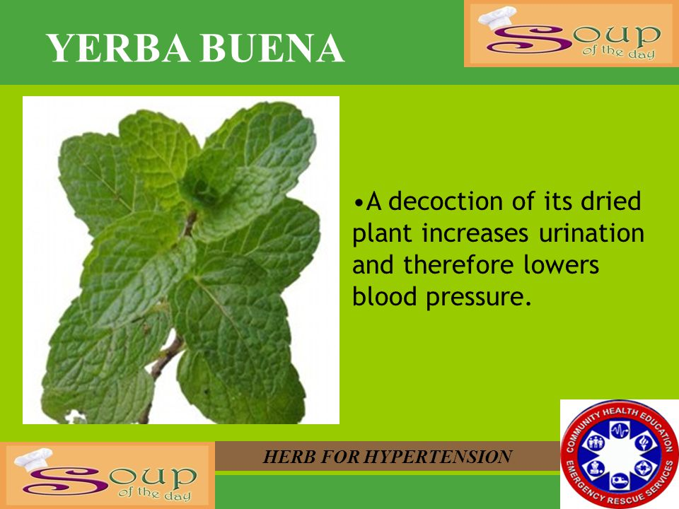 YERBA BUENA A decoction of its dried plant increases urination and therefore lowers blood pressure.