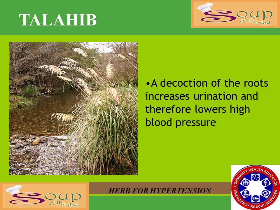 TALAHIB A decoction of the roots increases urination and therefore lowers high blood pressure.