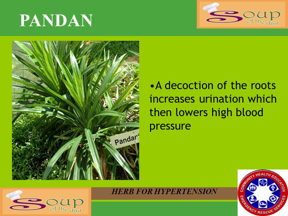 PANDAN A decoction of the roots increases urination which then lowers high blood pressure.