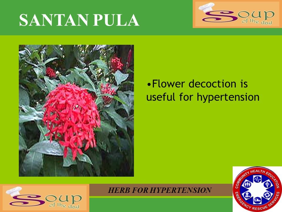 SANTAN PULA Flower decoction is useful for hypertension