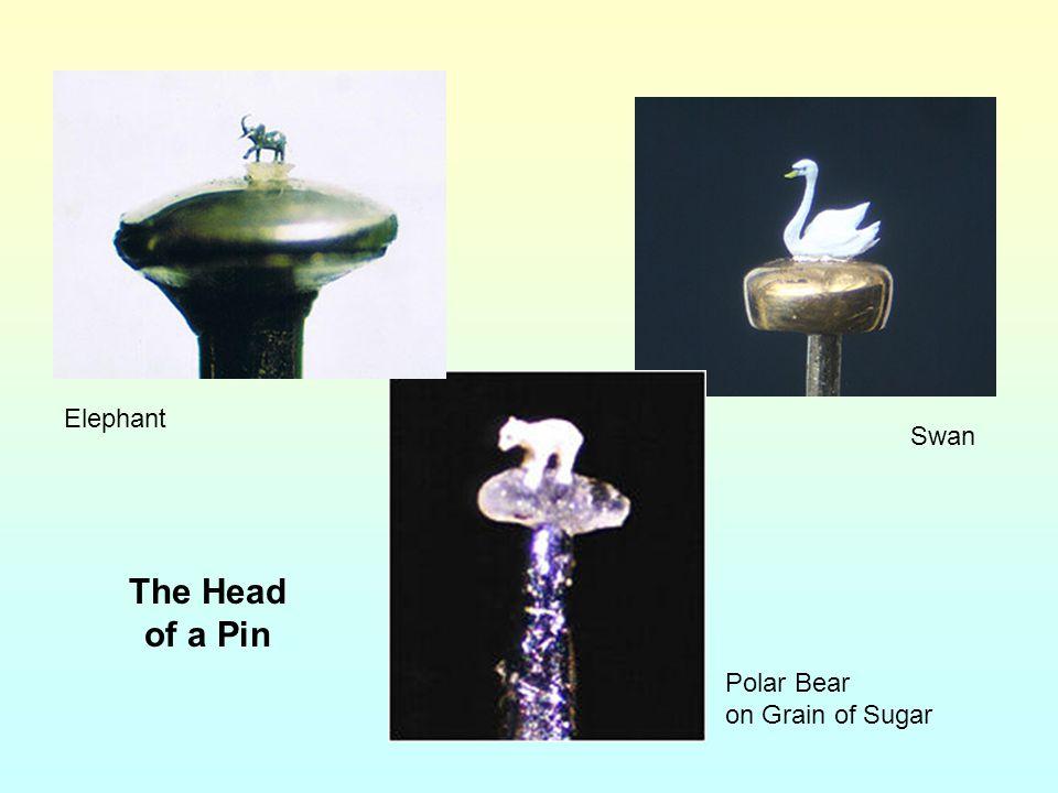 Elephant Swan The Head of a Pin Polar Bear on Grain of Sugar