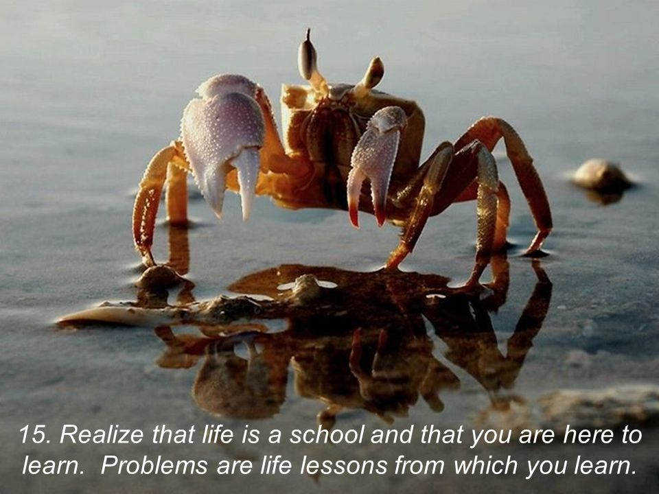 15. Realize that life is a school and that you are here to learn