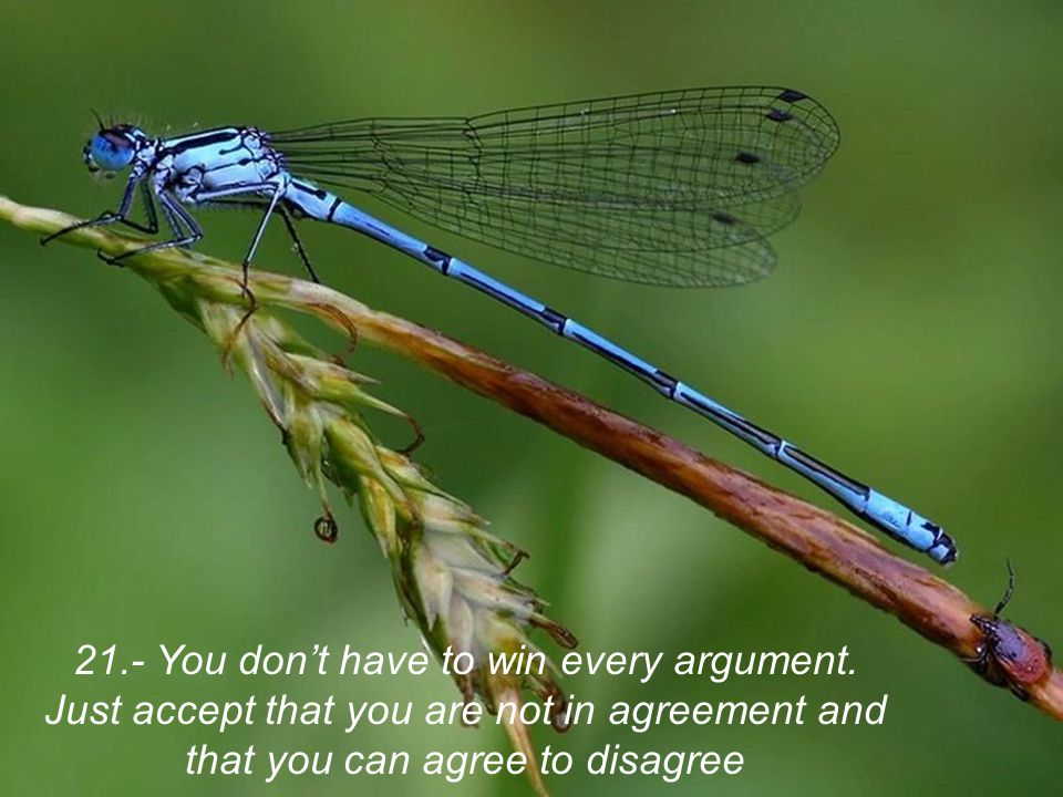 21. - You don't have to win every argument