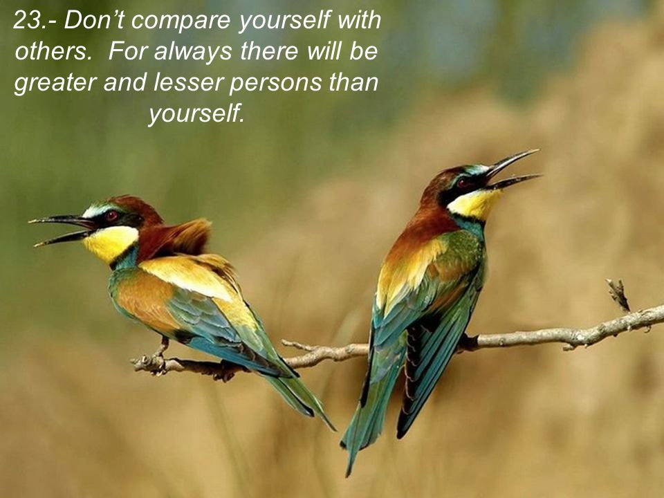 23. - Don't compare yourself with others