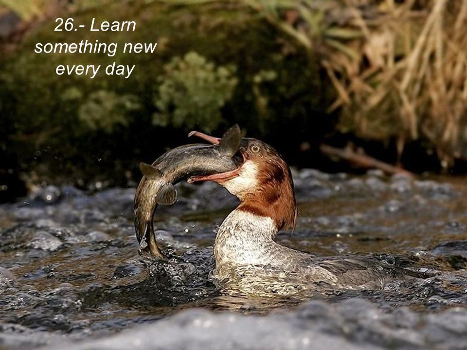 26.- Learn something new every day