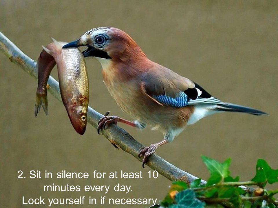 2. Sit in silence for at least 10 minutes every day.