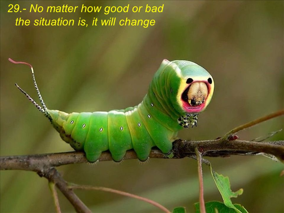 29.- No matter how good or bad the situation is, it will change