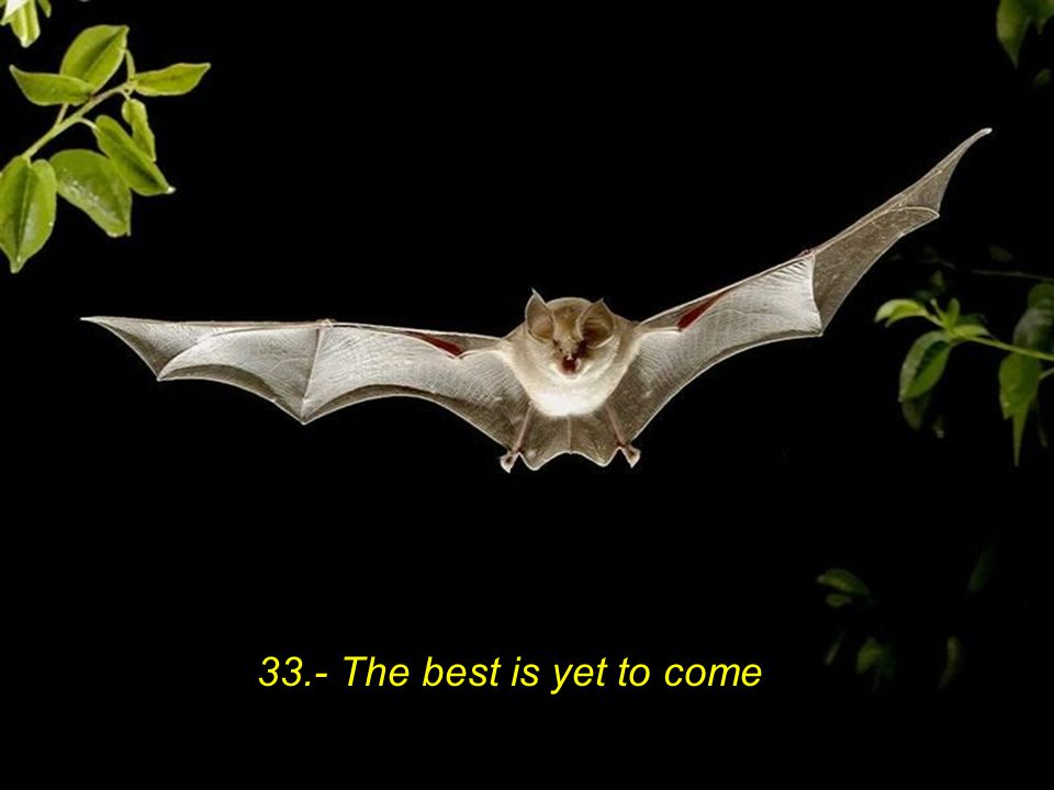 33.- The best is yet to come