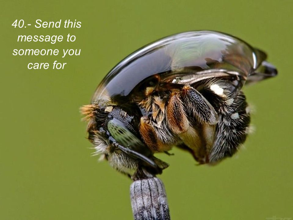 40.- Send this message to someone you care for