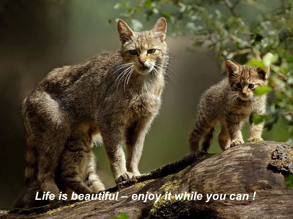 Life is beautiful – enjoy it while you can !