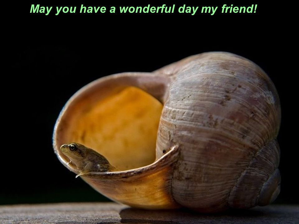 May you have a wonderful day my friend!