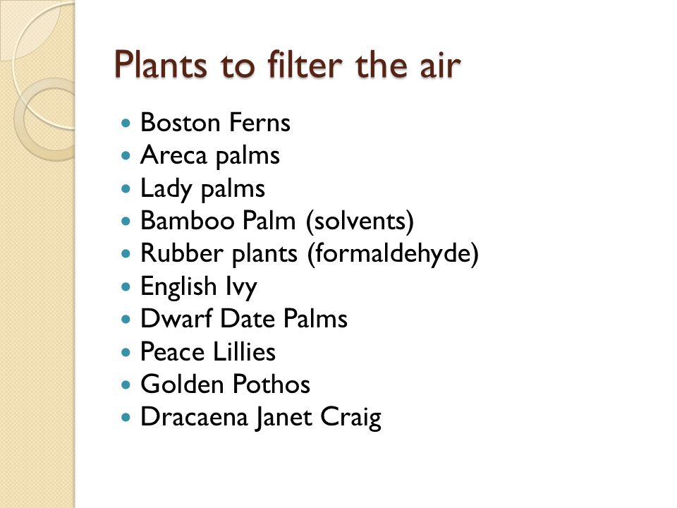 Plants to filter the air