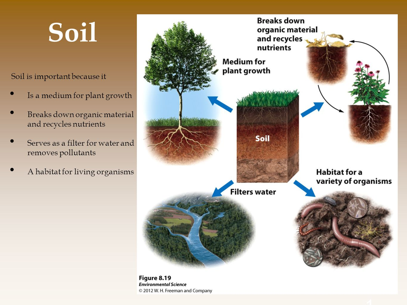 Soil Soil is important because it Is a medium for plant growth