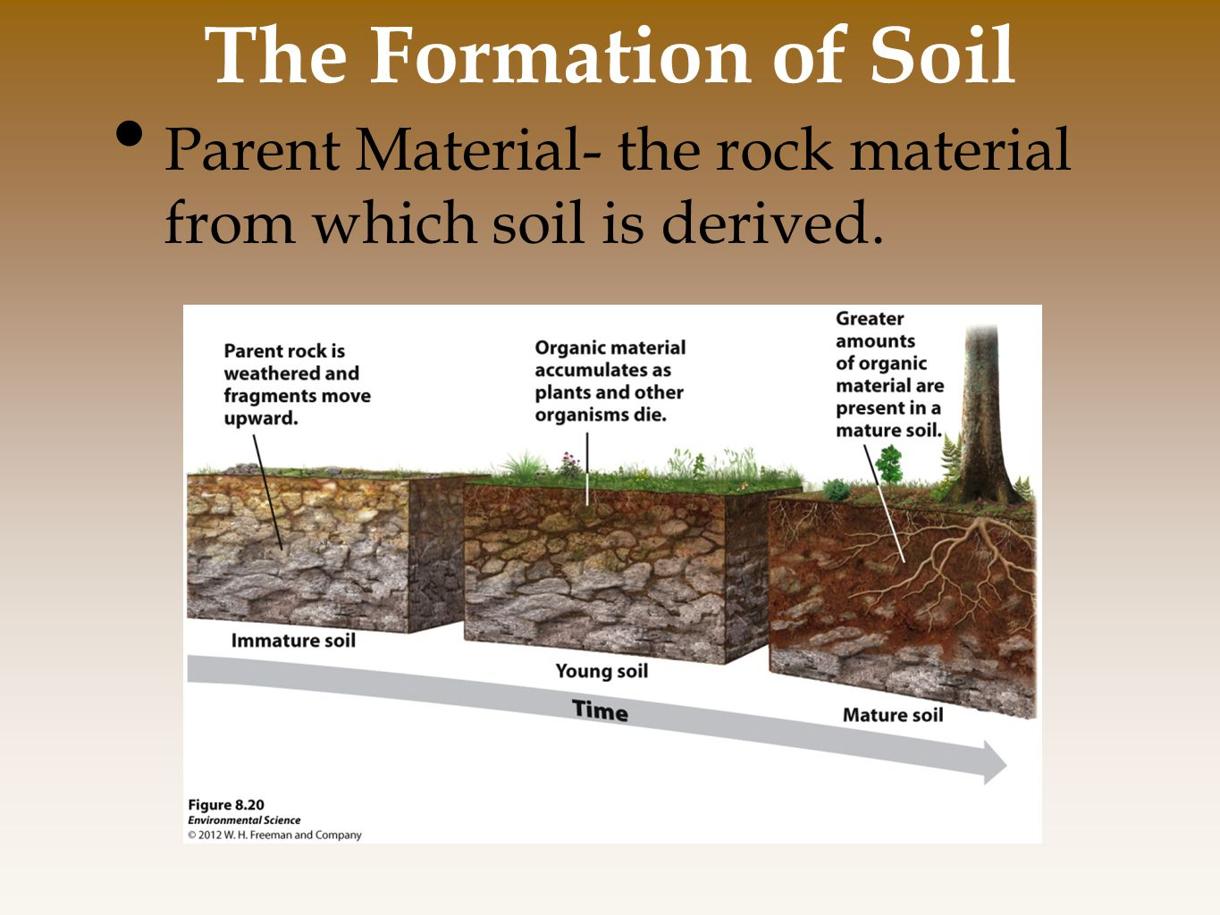 The Formation of Soil Parent Material- the rock material from which soil is derived.