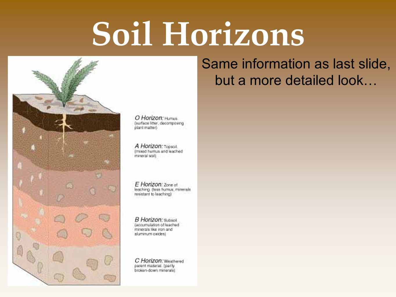 Same information as last slide, but a more detailed look…
