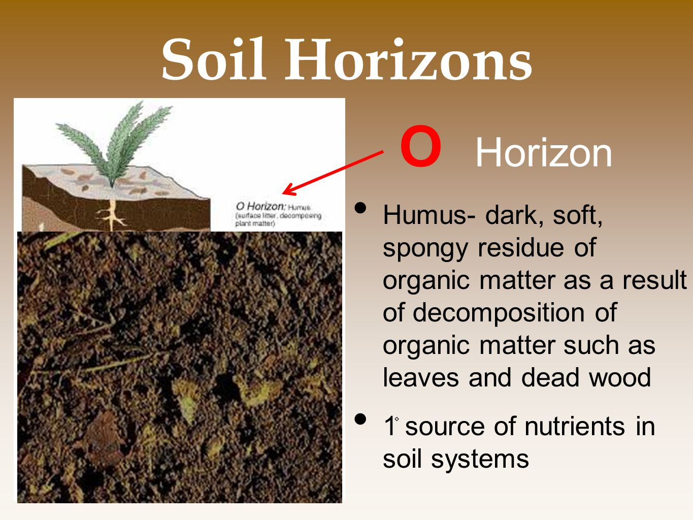 Chapter 10 land public and private ppt video online for Soil horizons