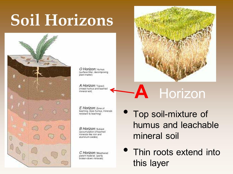 A Horizon Soil Horizons